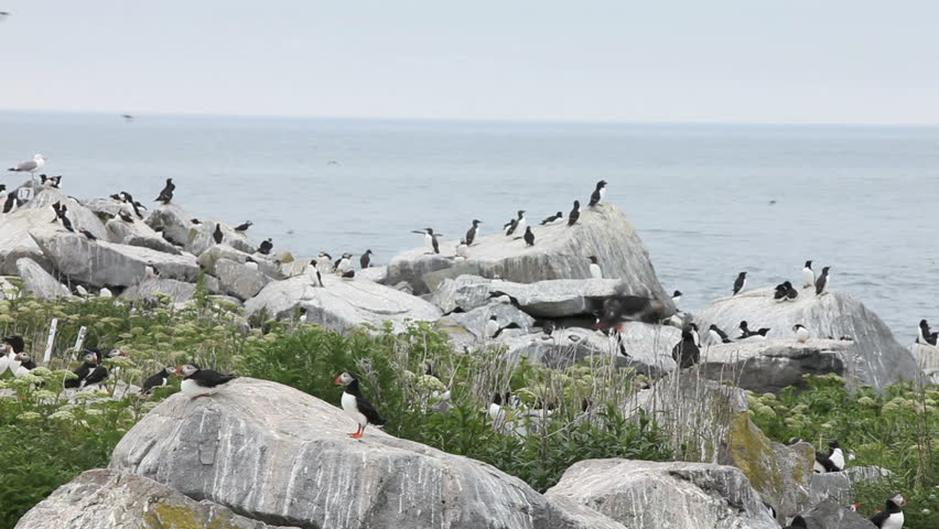 how to get to seal island maine