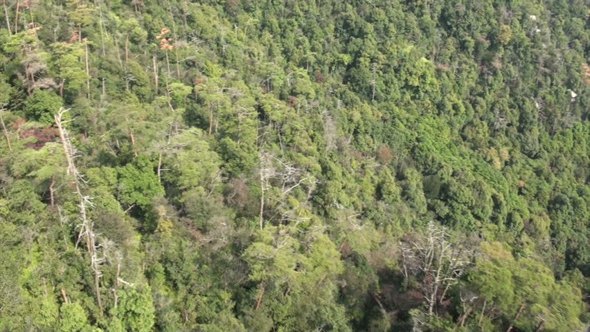 Flying over an old forest from the Miyajima island cable car in Japan  - HD stock footage clip