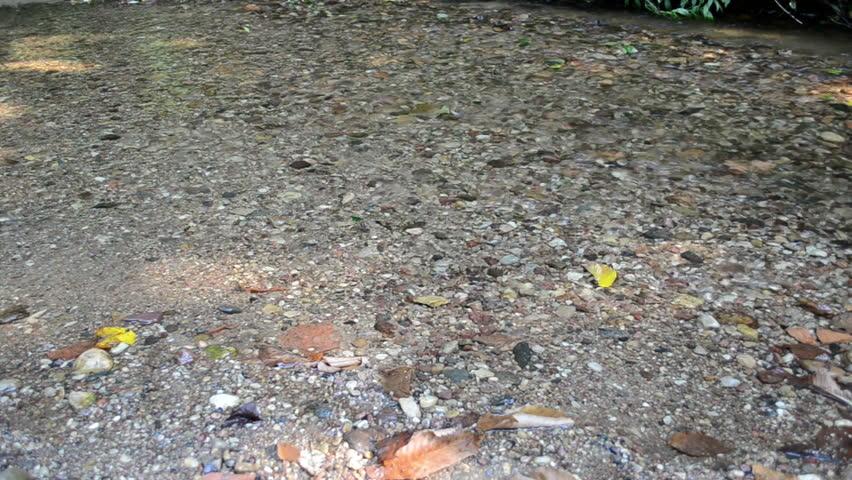 woman legs walk through park forest stream brook water flow. - HD stock video clip