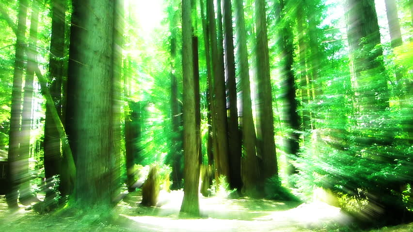 VJ Redwood Forest Sunlight 01 - HD stock video clip