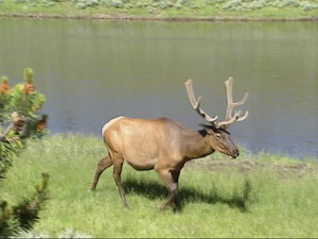 yellowstone national park catholic singles Montana and yellowstone park singles adventure 40's  abundance of outdoor sports, wildlife and proximity to yellowstone national park.