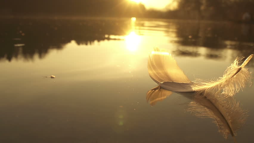 REVERSED: floating feather - HD stock footage clip