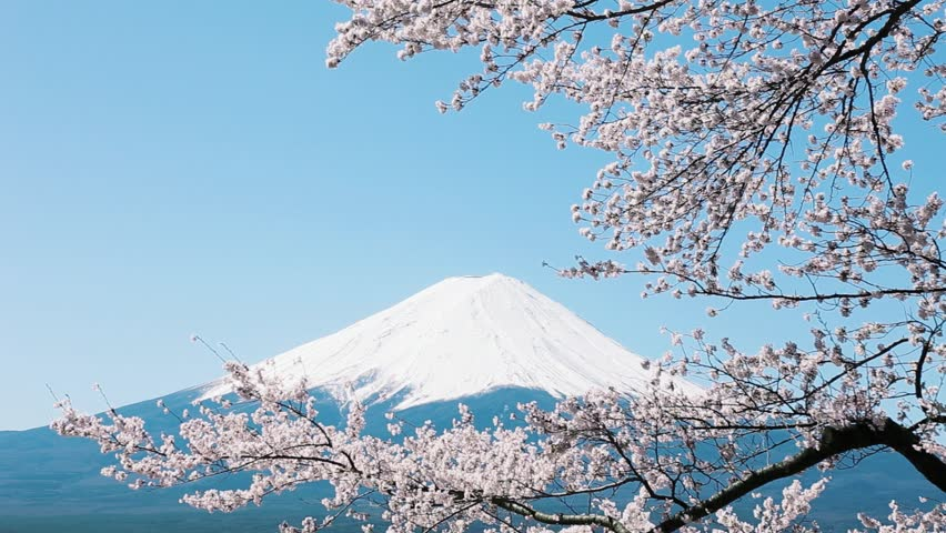 Mt. Fuji with cherry blossom - HD stock footage clip