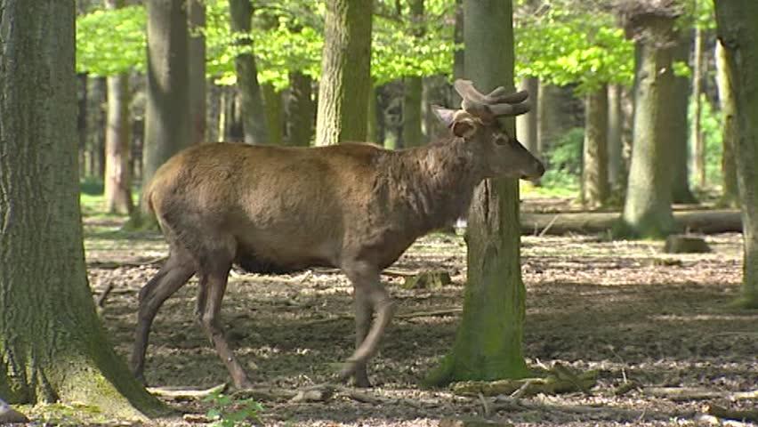 meet singles in red deer