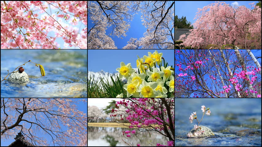 Four seasons collage. Several footage at different time of the year. Planet earth life cycle concept.