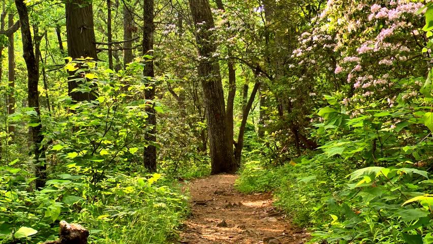 Mountain trail hd