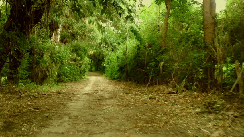 Driving slowly a Car on a forest internal dirt Road - POV - Point of view front - windshield. Day. - HD stock footage clip