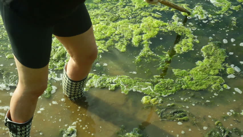 Cleaning a pond full of algea
