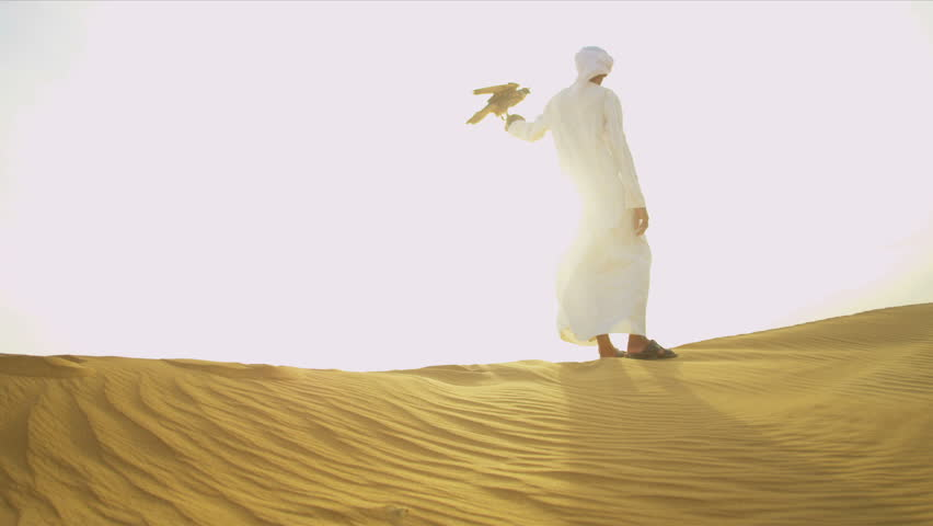 Saker falcon displaying wings tethered to male Arab owners wrist desert location sun lens flare shot on RED EPIC