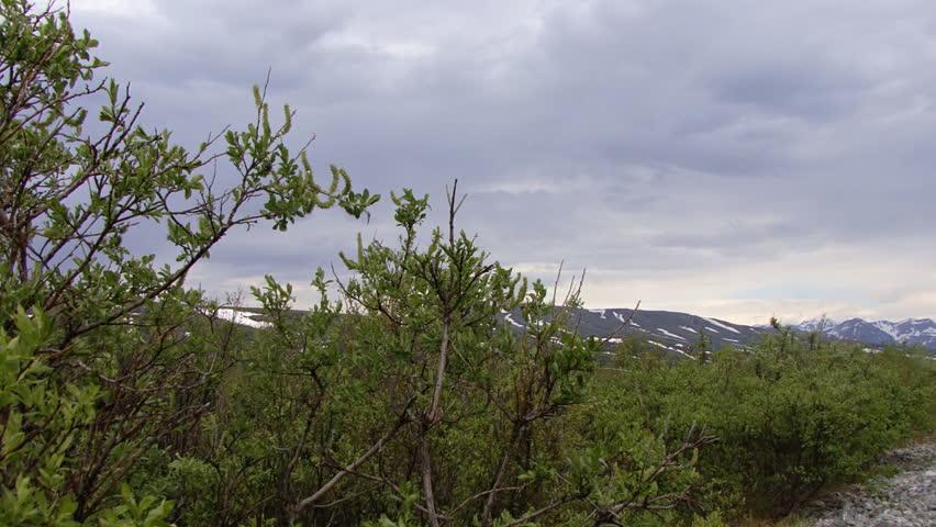 Pan from Alaskan wilderness to Trans-Alaskan petroleum pipeline - HD stock footage clip