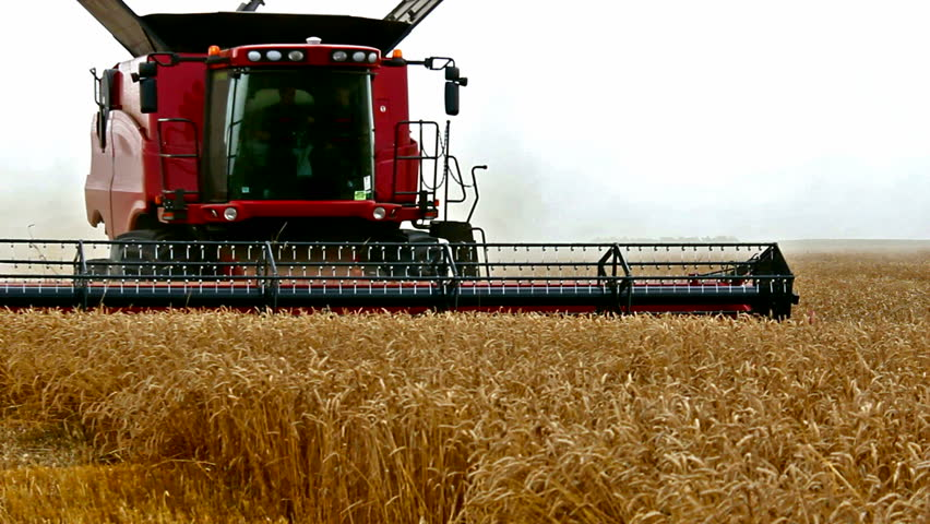 wheat harvest with modern combine harvester,video clip ; Combine harvester