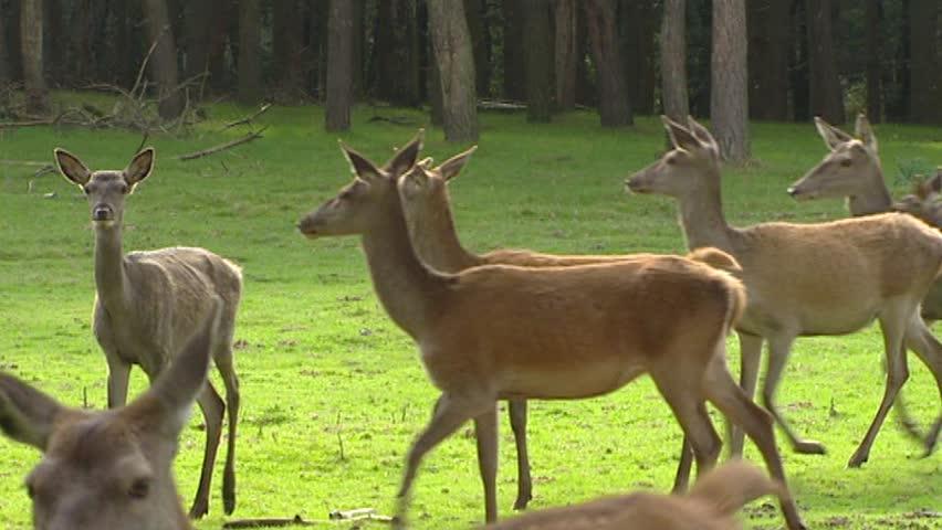 red deer black singles Réservez maintenant l´hôtel black knight inn à red deer avec hrs garantie de prix hrs évaluations d'hôtels annulation gratuit.