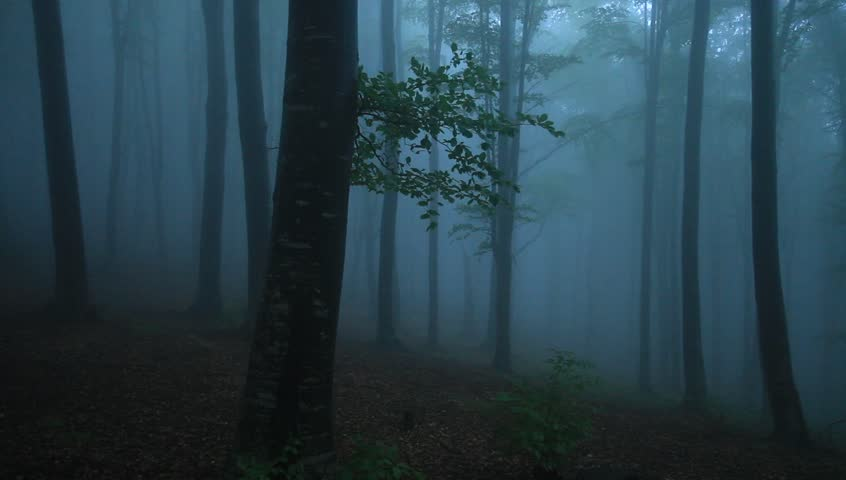Foggy Forest With Rain Drops Sound Hd Stock Footage Clip