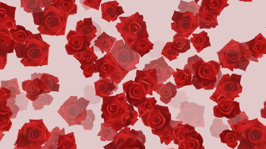 Rose flower backgrounds