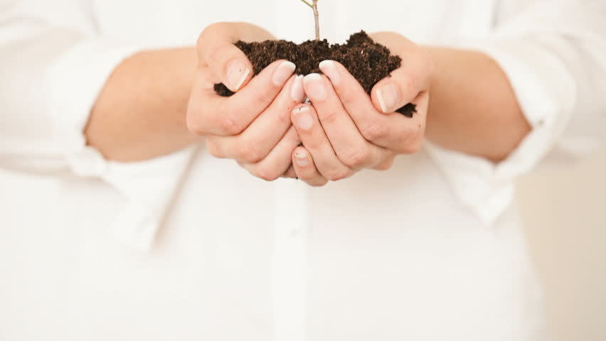 Handful of Soil with Young Plant Growing. Concept and symbol of growth, care, sustainability, protecting the earth, ecology and green environment. Caucasian female hands.