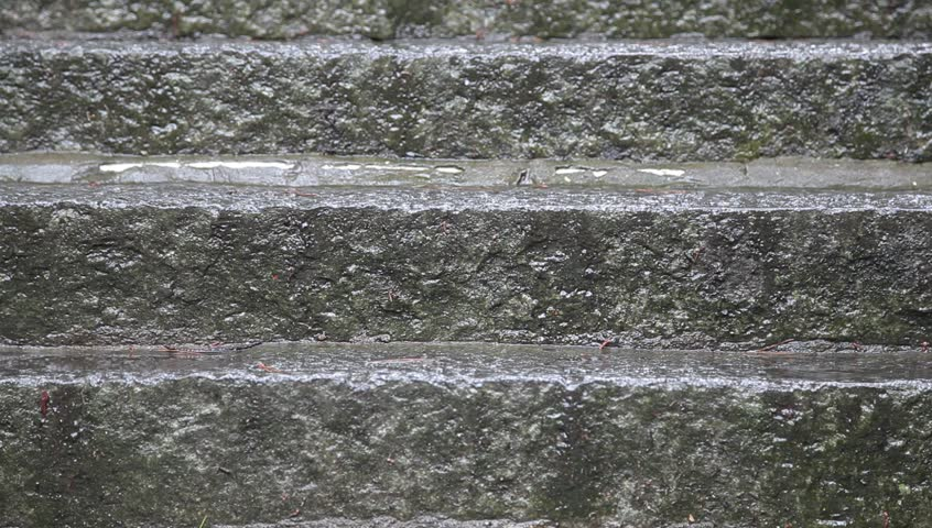 Heavy rainy day - Gray Line New York Sightseeing