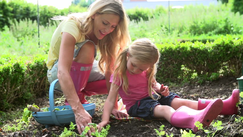 Mother and daughter picking radishes and putting them into basket