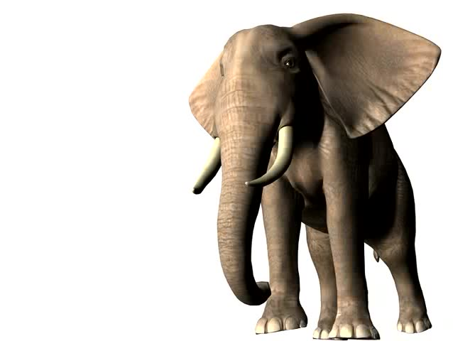 African Elephant animation. Elephant walks toward the camera, rocking it's head back and forth, eyes open and close, trunk trumpets and moves to mouth. Clean white background. No sound track.