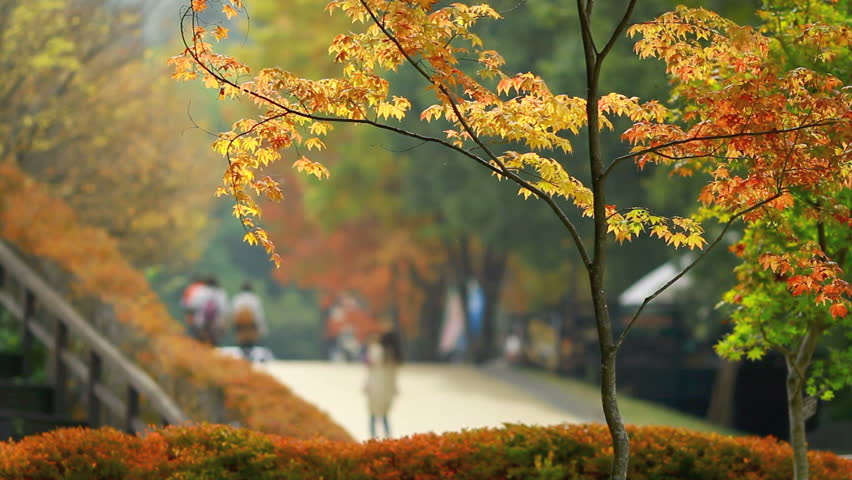 People walk in the park on a sunny day in autumn. Blurred motion.