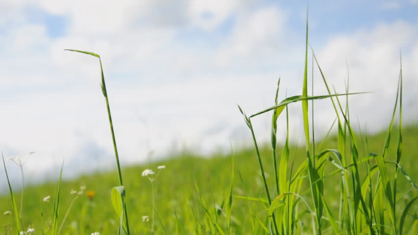 grass moving in wind, background cloudy sky - HD stock footage clip