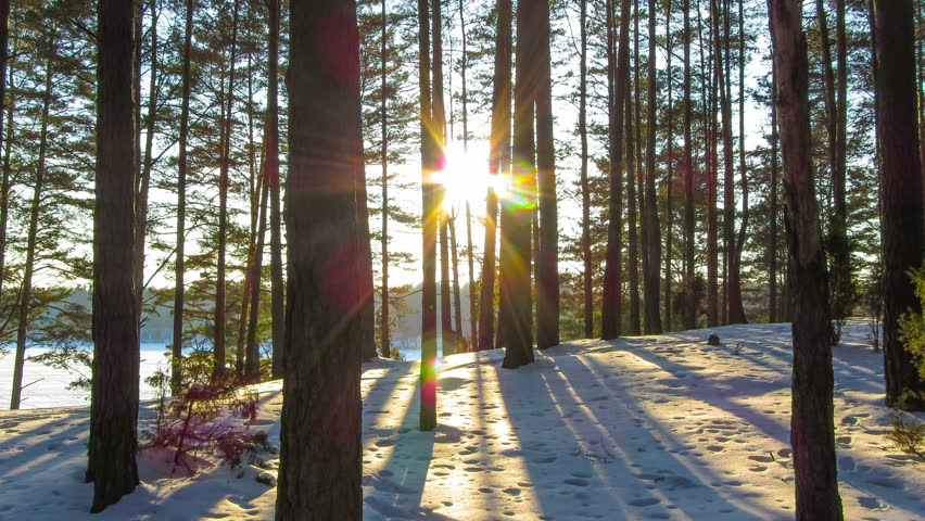 winter forest and sun, 4K timelapse - 4K stock video clip