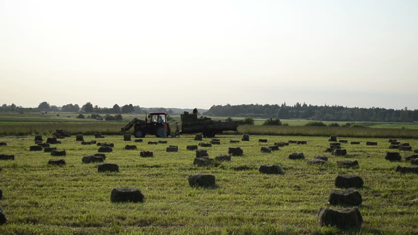 people loading of the tractor trailer dry compressed hay bales
