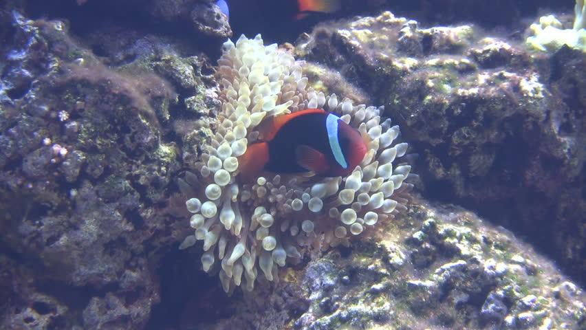 , TEXAS/USA - MAY 8: Frontage Of Houston Downtown Public Aquarium ...