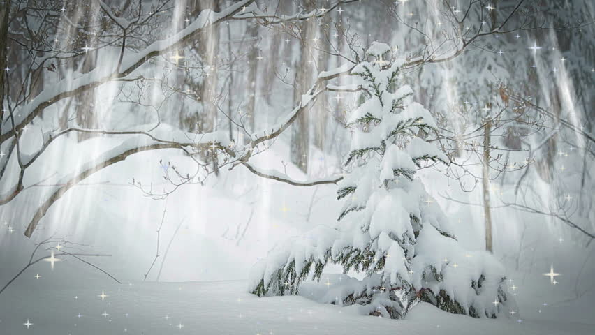 Spruce trees in snowy forest.