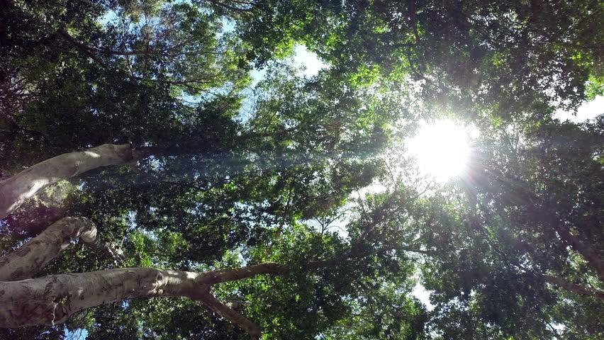 Sun breaking through the trees.