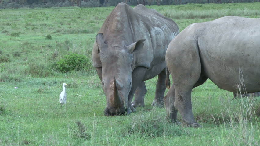oxpecker and grazing herbivores relationship quizzes