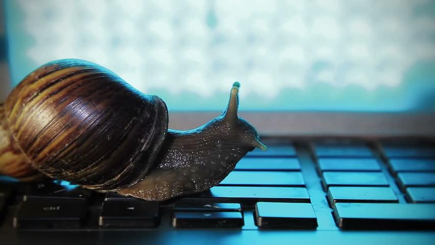 Snail crowling on a laptop keyboard