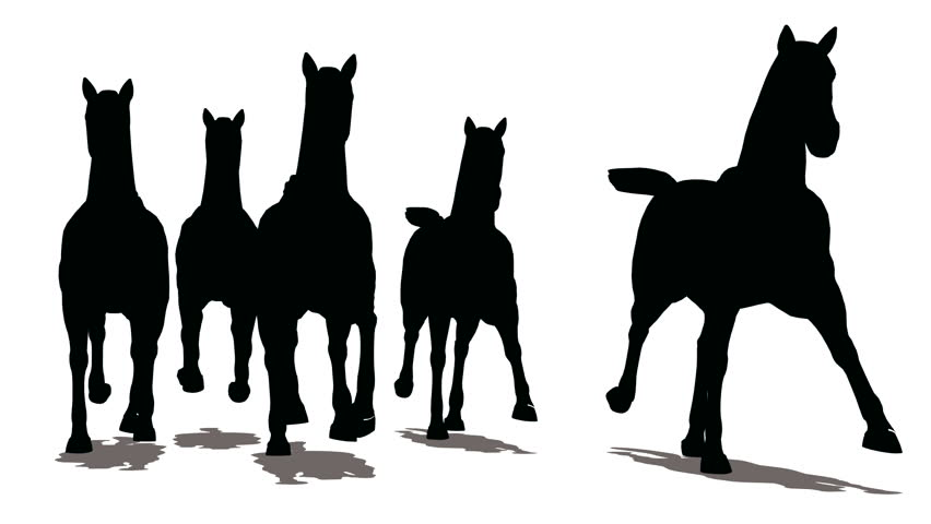 Run of herd of horses, the front view, black silhouette on white background  - HD stock video clip