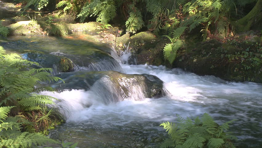 Pure fresh water waterfall in forest - HD stock video clip