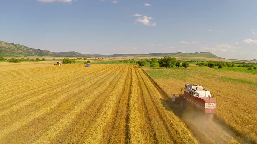 Combine harvester gathering wheat crop. Aerial view.