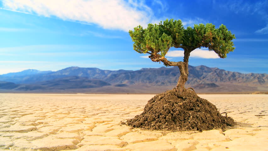 Time-lapse cloud concept shot of living tree in arid desert landscape with hills behind  - HD stock video clip