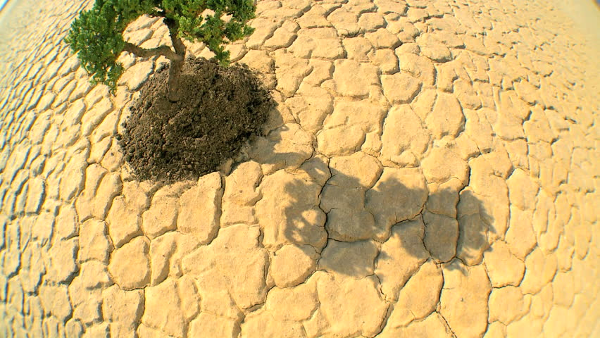 Overhead concept climate change shot of green tree growing in barren desert landscape in wide-angle - HD stock footage clip