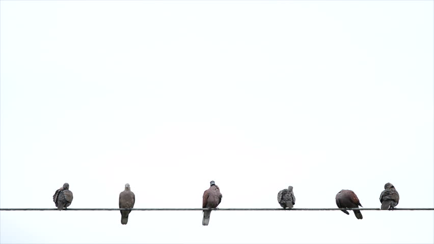 Birds on cable wires