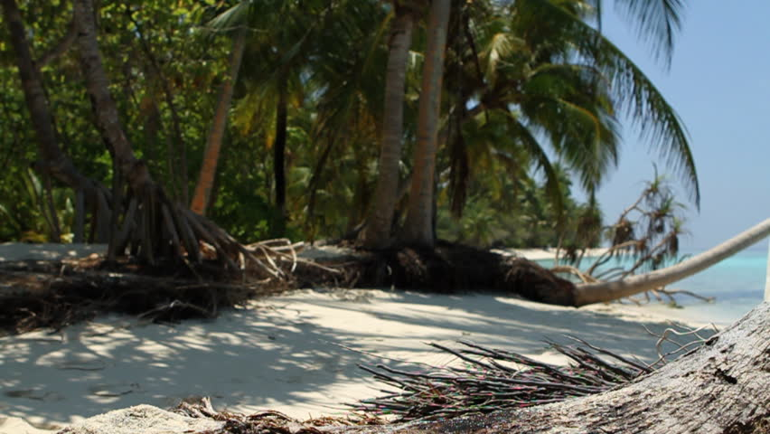 falling coconut on tropical beach wide filmed with 60p  - HD stock video clip