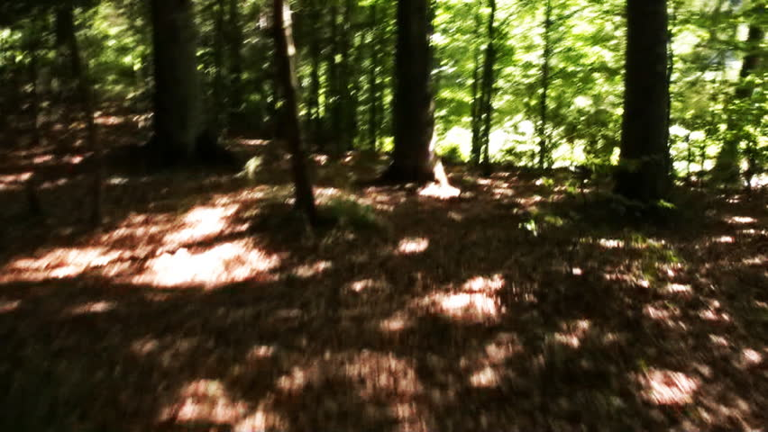Forest chase