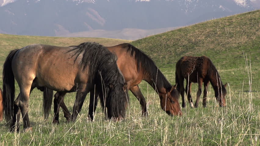 love horses pasture wallpaper - photo #21