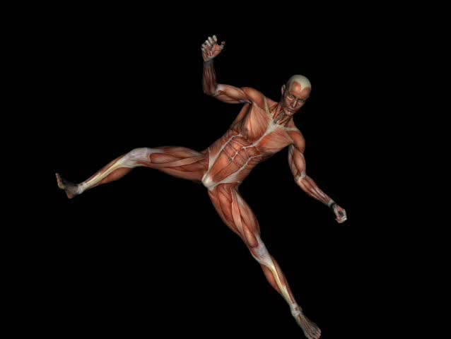 Anatomically correct medical model of the human body, muscular man. 3 D render, illustration. Fight poses. - SD stock video clip