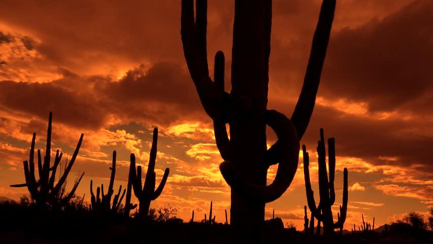 Time Lapse, Fast moving, fiery sunset clouds sweep across silhouetted saguaro cactus in dramatic Arizona desert landscape. 4K UHD 3840x2160