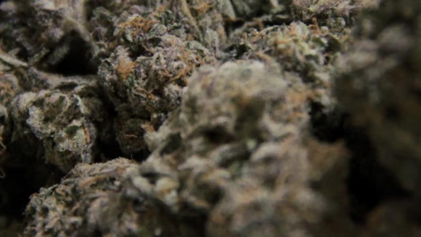 Marijuana Macro Close Up 3
