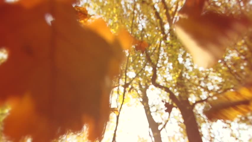 Autumn scene - Nature motion background.Autumn dry leaves falling on ground in autumn park. Beautiful autumn forest with sun shining. Slowmotion 240 fps. High Speed camera shot 1080