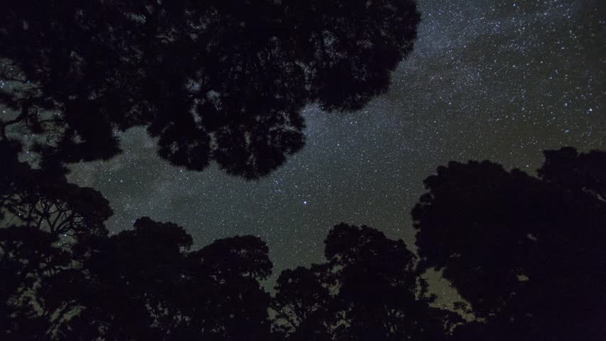 Milky Way with trees on isla de La Palma, Canary Islands, Spain. Timelapse footage.