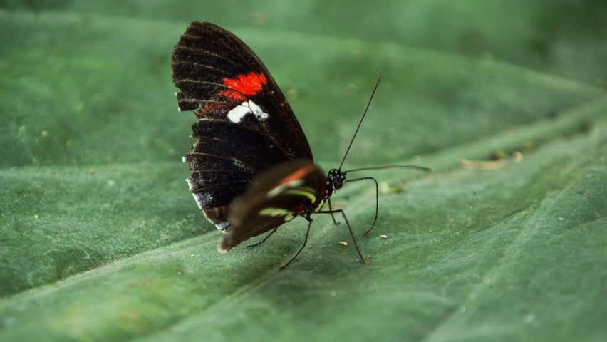 beautiful butterflies filmed close up