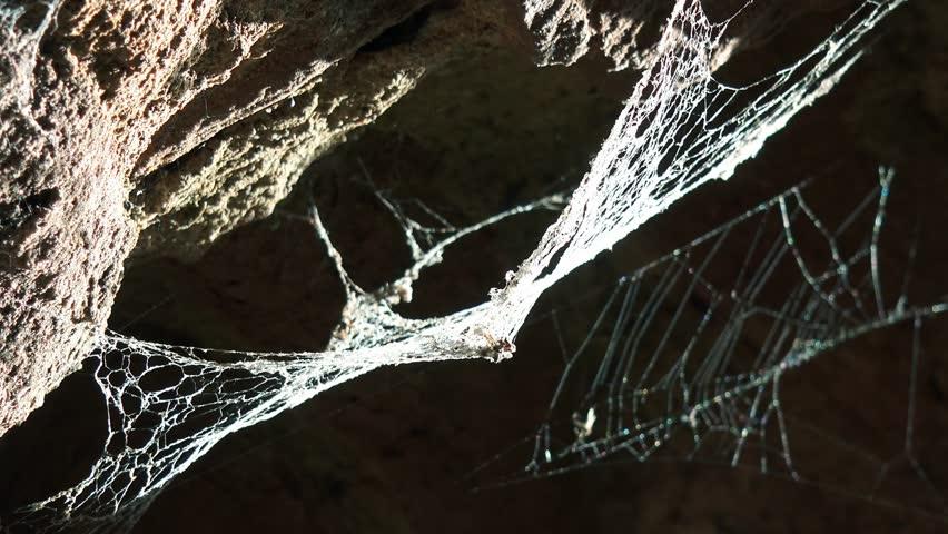 Old cobweb on stone wall