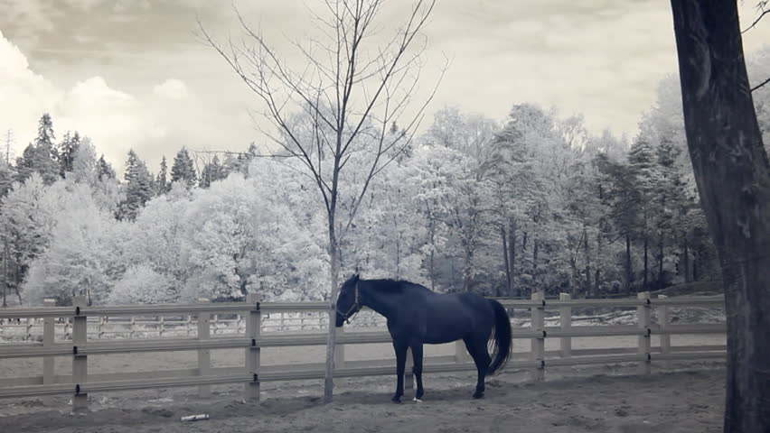 Infrared fauna: horse stays still at midday in paddock 4  - HD stock footage clip