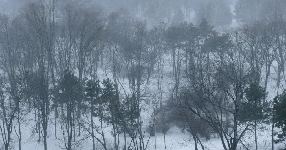 Snow falling in winter forest. 4K UHD. - 4K stock video clip
