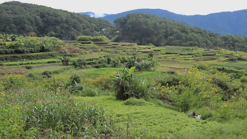 Rice terraces in Sagada, Philippines